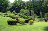 kebun raya bedugul Bali