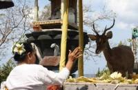 pulau menjangan bali indonesia