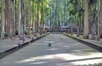 hutan sangeh