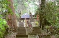 Pepohonan Yang Mengelilingi Pura Luhur Batukaru, Tabanan